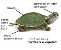 <p>Tortles is of vegetal!!!¡</p>: powered by Sunn  and water  leaves  seeds  come  out  here  roots  (doesn't move)  THEY lied to us  Tortles is a vegetal! <p>Tortles is of vegetal!!!¡</p>
