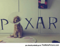 Pixar, Tumblr, and Best: POXAR  you should probably go to TheMetaPicture.com srsfunny:Best Impersonation Of The Pixar Lamp Ever