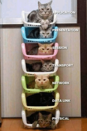 Link, Cat, and Iso: PPLICATION  PRESENTATION  SESSION  TRANSPORT  NETWORK  DATA LINK ISO/OSI cat model