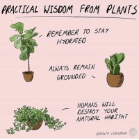 Advice, Memes, and Wisdom: PRACTICAL WISDOM FROM PLANTS  REMEMBER TO STA 7  H7ORATEO  ALWAYS REMAIN  GROUNDED  HUMANS WILL  DESTROY YOUR  NATURAL HABTTAT  NATALYA LOGANOVA Plant advice (By @natalyalobanova)