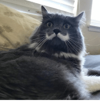 Practicing my shocked face for the debates tonight... #mustachecat: Practicing my shocked face for the debates tonight... #mustachecat