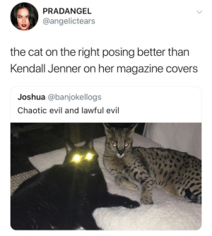 Kendall Jenner: PRADANGEL  @angelictears  the cat on the right posing better than  Kendall Jenner on her magazine covers  Joshua @banjokellogs  Chaotic evil and lawful evil