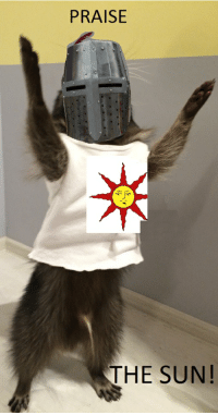 Praise the ~~raccoon~~ sun!: PRAISE  THE SUN! Praise the ~~raccoon~~ sun!