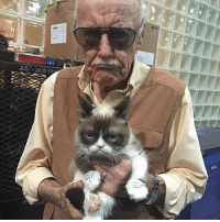 Memes, Stan, and Stan Lee: Prat  bran  25'-250 at Get ready for tomorrow for day 2 of Stan Lee's LA Comic Con! Early badge pick up starts at 7am and doors open at 9am  @therealstanlee & @realgrumpycat cant wait to see you! See our panel and autograph schedule for all info on times for signings for everyone! It's all online at stanLeesLAcomiccon.com and get those tickets!