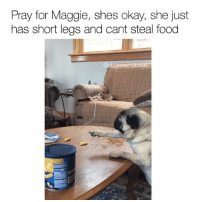 That struggle!! Tag your shortest friend.: Pray for Maggie, shes okay, she just  has short legs and cant steal food  ogs That struggle!! Tag your shortest friend.