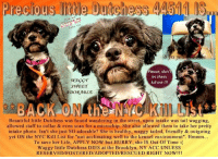 """Apparently, Beautiful, and Cats: Precious ttle Dutehess 44511 IS  Pick me  Chooseme  ove me  Save me  rs  WAGgr  SWEET  ADORABLE  Please, don't  let them  kill me !!!  Beautiful little Dutchess was found wandering in the street, upon intake was tail wagging,  allowed staff to collar & even scan for a microchip. She also allowed them to take her pretty  intake photo. Isn't she just SO adorable? She is healthy, waggy tailed, friendly & outgoing  yet ON the NYC Kill List for """"not acclimating well to the kennel environment"""". Hmmm...  To save her Life, APPLY NOW but HURRY, she IS Out Of Time :(  Waggy little Dutchess DIES at the Brooklyn, NY ACC UNLESS  RESERVED/FOSTERED/ADOPTED/RESCUED RIGHT NOW!!! **** TO BE KILLED 10/22/2018 in NYC ****  BACK on the KILL LIST!!! HELP !!! Beautiful little Dutchess was found wandering in the street, upon intake was tail wagging, allowed staff to collar & even scan for a microchip. She also allowed them to take her pretty intake photo. Isn't she just SO adorable? <3 She is healthy, waggy tailed, friendly & outgoing yet ON the NYC Kill List for """"not acclimating well to the kennel environment"""". Hmmm... To save her Life, APPLY NOW but HURRY, she IS Out Of Time :( Waggy little Dutchess DIES at the Brooklyn, NY ACC UNLESS RESERVED/FOSTERED/ADOPTED/RESCUED RIGHT NOW!!!  Dutchess 44511 Hello, my name is Dutchess.  My animal id is #44511.  I am a female black dog at the Brooklyn Animal Care Center.  The shelter thinks I am about 8 years old. I weigh only 11 lbs. I came into the shelter as a stray on 14-Oct-2018. Please, Please, Please, save me!  **************************************** To FOSTER or ADOPT beautiful little Dutchess, SPEAK UP NOW & Save a Life, APPLY with rescues OR message Must Love Dogs - Saving NYC Dogs IMMEDIATELY!!!! ****************************************  The general rule is to foster you have to be within 4 hours of the NYC ACC approved New Hope partner rescues you are applying with and to adopt you will have to be in the """