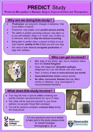 The RVC is recruiting dogs with IDIOPATHIC epilepsy of ANY breed, age, sex or neutered status from the United Kingdom to take part in this project. Dogs must have a history of TWO OR MORE SEIZURES PER MONTH.  What is involved?  1. Owners need to fill out a pre-study survey (link below) so that we can check your dog's eligibility to take part and to identify any prodromal (pre-seizure) and post ictal changes.  2. Eligible dogs wear a collar containing two activity monitors (accelerometers) for up to 21 days. The collar will be posted to your home address along with a pre-paid return envelope so that you can post the collar back to us.  3. Owners will be asked to complete a seizure diary during the study period.  If you would like to take part in PREDICT, please fill out this questionnaire to let us know about your dog and we will be in touch: https://www.surveymonkey.co.uk/r/PREDICTstudy  If you would like further information about any aspect of the study please do not hesitate to ask, and contact Dr Sarah Finnegan at: sfinnegan@rvc.ac.uk   Please note: collars are limited so there may be a waiting list to take part.: PREDICT Study  Prodrome Recognition in Epileptic Dogs to Improve Control and Therapeutics  Why are we doing this study?  'Prodromes are long term changes in behaviour that  occur before a seizure  Prodromes may enable us to predict seizure activity  The ability to predict upcoming seizures may allow us  to use anti-epileptic drugs in a smart' way, to allow us  to intervene and try to stop the seizure occurring  Being able to predict when a seizure is likely to occur  may improve quality of life of both you and your dog  We need to learn how to recognise prodromes in  dogs with epilepsy  Who can get involved?  ALL dogs of any breed, age, sex or neutered status  from the United Kingdom  Dogs with diagnosed idiopathic epilepsy  (diagnosed by a vet with bloods and unne tests)  Have a history of two or more seizures per month  Generalised tonic-clonic seizur