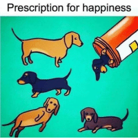 The more doxies the more happiness!: Prescription for happiness The more doxies the more happiness!