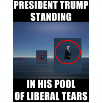 Pool, Conservative, and Right Wing: PRESIDENT TRUMP  STANDING  IN HIS POOL  OF LIBERAL TEARS The extra salty tears are the best 👌 trumpmemes salty yousalty liberals libbys democraps liberallogic liberal ccw247 conservative constitution presidenttrump nobama stupidliberals merica america stupiddemocrats donaldtrump trump2016 patriot trump yeeyee presidentdonaldtrump draintheswamp makeamericagreatagain trumptrain maga Add me on Snapchat and get to know me. Don't be a stranger: thetypicallibby Partners: @theunapologeticpatriot 🇺🇸 @too_savage_for_democrats 🐍 @thelastgreatstand 🇺🇸 @always.right 🐘 TURN ON POST NOTIFICATIONS! Make sure to check out our joint Facebook - Right Wing Savages Joint Instagram - @rightwingsavages Joint Twitter - @wethreesavages Follow my backup page: @the_typical_liberal_backup
