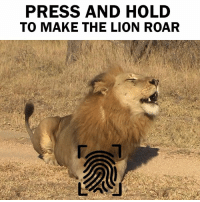 Try this guys! Only works on mobiles: PRESS AND HOLD  TO MAKE THE LION ROAR Try this guys! Only works on mobiles