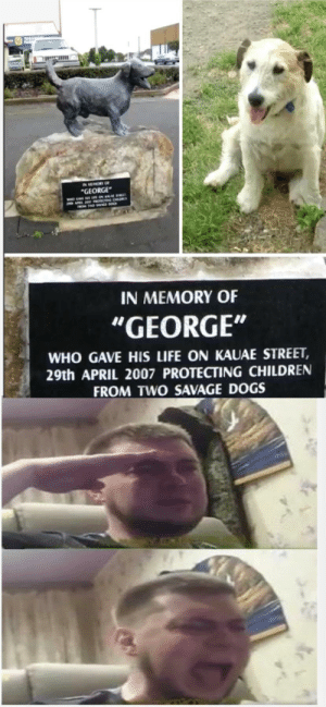 Press f to pay respects for a very good boy: Press f to pay respects for a very good boy