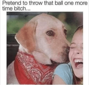 one more time: Pretend to throw that ball one more  time bitch...