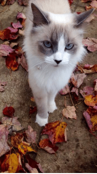 Pretty cat <3 Share your cat photos in the comments.: Pretty cat <3 Share your cat photos in the comments.