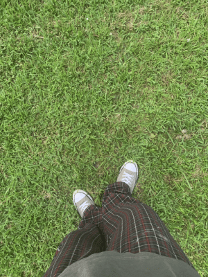 New Orleans, Grass, and New: Pretty grass in New Orleans