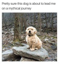 Funny, Girl Memes, and Journeys: Pretty sure this dog is about to lead me  on a mythical journey I'm down (@friendofbae) (DM-Email for credit or removal if this is your dog)