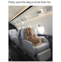 Funny, Ted, and Hilarious: Pretty sure this dog is richer than me First class doggo (@hilarious.ted)