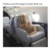 Memes, 🤖, and Dog: Pretty sure this dog is richer than me For sure! 😂