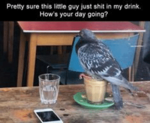 Funny, Meme, and Shit: Pretty sure this little guy just shit in my drink.  How's your day going? Afternoon Funny Meme Dump 40 Pics  Afternoon Funny Meme Dump 40 Pics