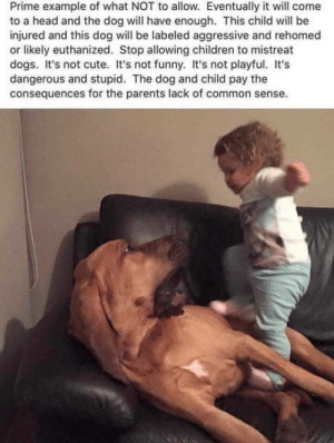 Children, Cute, and Dogs: Prime example of what NOT to allow. Eventually it will come  to a head and the dog will have enough. This child will be  injured and this dog will be labeled aggressive and rehomed  or likely euthanized. Stop allowing children to mistreat  dogs. It's not cute. It's not funny. It's not playful. It's  dangerous and stupid. The dog and child pay the  consequences for the parents lack of common sense. Stop this bullshit