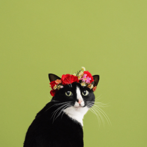 Tumblr, Best, and Blog: princesscheeto:I am my own muse, the subject I know best. 🌹 #CheetoCatlo gorgeous baby