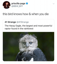 Bbw, Eagle, and Dank Memes: priscilla page  @BBW_BFF  this bird knows how & when you die  41 Strange @41Strange  The Harpy Eagle, the largest and most powerful  raptor found in the rainforest @bbwbff