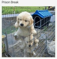 Prison, Break, and Prison Break: Prison Break Look just like the actors