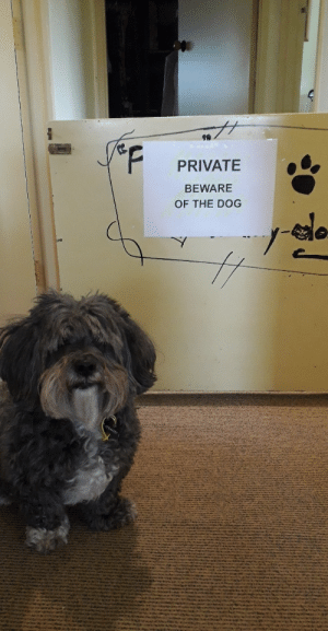 This here is a photo of my family's big scary guard dog.: PRIVATE  BEWARE  OF THE DOG This here is a photo of my family's big scary guard dog.