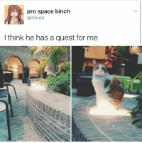 Memes, Quest, and 🤖: pro space binch  arieule  think he has a quest for me Take me with you Cat😻