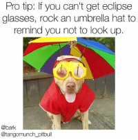 Advice, Fashion, and Memes: Pro tip: If you can't get eclipse  glasses, rock an umbrella hat to  remind you not to look up.  @bark  @tangomunch_pitbull Eclipse AND fashion advice from @tangomunch_pitbull solareclipse2017 solareclipse