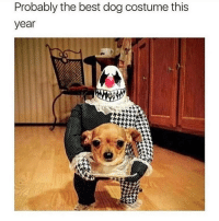 Tag someone that needs doggo costume ideas.. @puppiesbetch for more @puppiesbetch @puppiesbetch: Probably the best dog costume this  year Tag someone that needs doggo costume ideas.. @puppiesbetch for more @puppiesbetch @puppiesbetch