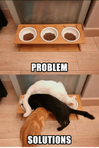 Dank, 🤖, and Did: PROBLEM  SOLUTIONS Meow did it meow way.