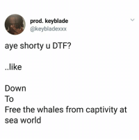 Sea World: prod. keyblade  @keybladexxx  aye shorty u DTF?  ..like  Down  To  Free the whales from captivity at  sea world