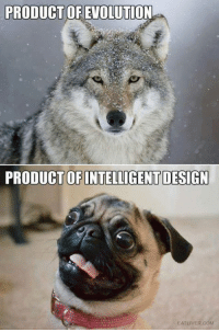 (Just for fun!) Have a wonderful new year everyone!: PRODUCT OF EVOLUTION  PRODUCT OF INTELLIGENT DESIGN  EAT LIVER COM (Just for fun!) Have a wonderful new year everyone!