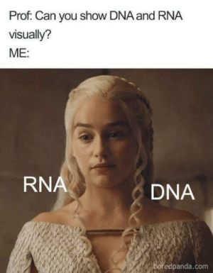 Memes, 🤖, and Dna: Prof. Can you show DNA and RNA  visually?  ME:  RN  DNA  boredpanda.com Excited for the new season!