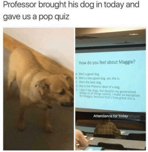 louiekablooey:  me: Professor brought his dog in today and  gave us a pop quiz  How do you feel about Maggie?  A She's a good dog  8 Shes a very good dog, yes she is  C She's the best dog  o She is the Platonic ideal of a dog  E. don't ke dogs, but despite my generalized  distke of all things canine, I make an exception  for Maggie, because that's how great she is  Attendance for today louiekablooey:  me