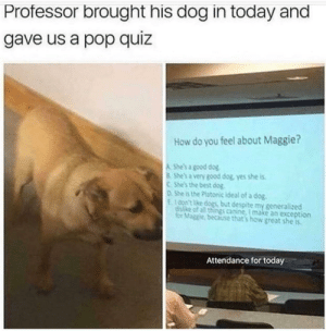me_irl: Professor brought his dog in today and  gave us a pop quiz  How do you feel about Maggie?  A She's a good dog  8 She's a very good dog, yes she is  CShe's the best dog  0She is the Platonic ideal of a dog.  E100n't ke dogs but despite my generalized  disike of all things canine, I make an exception  for Maggie, because that's how great she is  Attendance for today me_irl