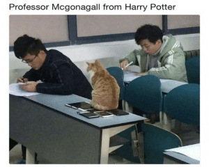 Animals, Bad, and Bad Day: Professor Mcgonagall from Harry Potter 62 Funny Animals That Will Make You Completely Forget About That Bad Day You're Having - JustViral.Net