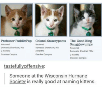 Memes, Humane Society, and Kittens: Professor PuddinPop Colonel S  The Good King  Snugglewumps  Domestic Shorthair/Mix  Domestic Shorthair/Mix  Neutered  2 months  2 months  Domestic shorthair Mix  Ozaukee Campus  Ozaukee Campus  2 months  Ozaukee Campus  tastefully offensive:  Someone at the Wisconsin Humane  Society is really good at naming kittens.