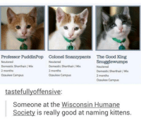Good, Humane Society, and Kittens: Professor PuddinPop Colonel Snazzypants The Good King  Snugglewumps  Neutered  Neutered  Domestic Shorthair/Mix  Domestic Shorthair/Mix  Neutered  2 months  2 months  Domestic Shorthair/Mix  Ozaukee Campus  Ozaukee Campus  2 months  Ozaukee Campus  tastefullyoffensive  Someone at the Wisconsin Humane  Society is really good at naming kittens.