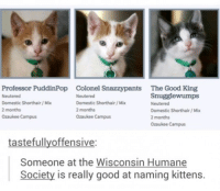 Memes, Good, and Humane Society: Professor PuddinPop  Neutered  Domestic Shorthair / Mix  2 months  Ozaukee Campus  Colonel Snazzypants  Neutered  Domestic Shorthair/Mix  2 months  Ozaukee Campus  The Good King  Snugglewumps  Neutered  Domestic Shorthair/ Mix  2 months  Ozaukee Campus  tastefullyoffensive:  Someone at the Wisconsin Humane  Society is really good at naming kittens.