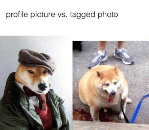 Sherblock Holmes vs Bepis Shibe by Feels_Bad_Man19 MORE MEMES: profile picture vs. tagged photo Sherblock Holmes vs Bepis Shibe by Feels_Bad_Man19 MORE MEMES