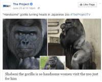 "Tumblr, Women, and Japanese: PROIECT The Project  Like Page  June 25 at 10:18pm  ""Handsome"" gorilla turning heads in Japanese zoo #TheProjectTV  Shabani the gorilla is so handsome women visit the zoo just  for him <p>Gorilas hermosos en un zoo de&hellip; cómo no JAPÓN</p><figure class=""tmblr-full"" data-orig-height=""370"" data-orig-width=""370""><img src=""https://78.media.tumblr.com/88805e9ea613ef1e00e564197a8524ee/tumblr_inline_nty1skwonT1qhy6fn_540.jpg"" data-orig-height=""370"" data-orig-width=""370""/></figure>"