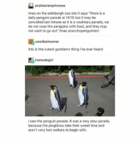 """smiLE AND WAVE, BOYS - Max textpost textposts: proletarianprincess  Imao on the edinburgh zoo site it says """"there is a  daily penguin parade at 14:15 but it may be  cancelled last minute as it is a voulntary parade, we  do not coax the penguins with food, and they may  not want to go out"""" Imao anarchopenguinism  cannibalmemer  this is the cutest goddamn thing i've ever heard  livenudegirl  I saw the penguin parade. It was a very slow parade,  because the pingüinos take their sweet time and  aren't very fast walkers to begin with. smiLE AND WAVE, BOYS - Max textpost textposts"""