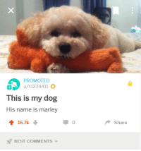 Best, Cool, and Best Comments: PROMOTED  u/t1234411  This is my dog  His name is marley  16.7k  0  Share  BEST COMMENTS <p>I keep on getting these really cool promoted posts</p>