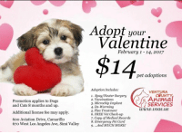 IF ANYONE WANTS TO GET ME A PUPPY THEY'RE ONLY $14: Promotion applies to Dogs  and Cats 8 months and up.  Additional license fee may apply.  60o Aviation Drive, Camarillo  67o West Los Angeles Ave, Simi Valley  Adopt your  Valentine  February 1-14, 2017  $14  pet adoptions  Adoption Includes:  VENTURA  1. Spay/Neuter Surgery  Animal  2. Vaccinations  3. Microchip Implant  SERVICES  4. De-Worming  www.v cas.uS  5. Flea Treatment  6. FREE Vet Check-up  7. Copy of Medical Records  8. Emergency Pet Card  9. ...And MUCH MORE! IF ANYONE WANTS TO GET ME A PUPPY THEY'RE ONLY $14