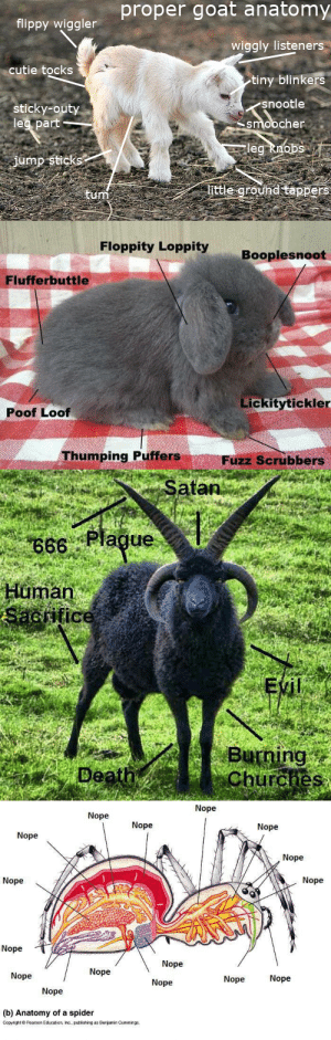 Today's Life Science lesson : proper goat anatomy  flippy wiggler  wiggly listeners  cutie tocks  tiny blinkers  snootle  smoocher  leg knobs  sticky-outy  leg part  jump sticks  little ground tappers   Floppity Loppity  Booplesnoot  Flufferbuttle  Lickitytickler  oof Loof  Thumping Puffers  Fuzz Scrubbers   Satan  66 Plague  uman  Buning  Churches   Nope  Nope  Nope  Nope  Nope  Nope  Nope  Nope  Nope  Nope  Nope  Nope  Nope  Nope  Nope  Nope  (b) Anatomy of a spider  Copyright O Pearson Education, Inc., publishing as Benjamin Cummings  Today's Life Science lesson