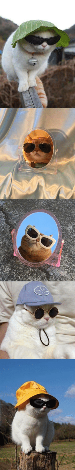 protect-and-love-cats:  Cats with more style than you: protect-and-love-cats:  Cats with more style than you