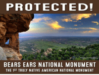 Memes, Native American, and Bear: PROTECTED!  Photo by Tim Peterson  BEARS EARS NATIONAL MONUMENT  THE 1ST TRULY NATIVE AMERICAN NATIONAL MONUMENT BREAKING: President Obama protects #BearsEars! Today, the president used the Antiquities Act to designate the Bears Ears National Monument in a historic action to preserve Native American culture and add to a legacy of honoring America's shared history. The new national monument - the result of a proposal from the Hopi, Navajo, Uintah and Ouray Ute, Ute Mountain Ute, and Zuni - will safeguard more than 100,000 cultural sites, traditional land use, and an incredible natural landscape for generations to come. #MonumentsForAll