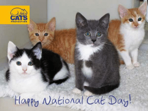 Happy national cat day fur friends. Shadow the white kitty and co: PROTECTION  appy National Cat Dag Happy national cat day fur friends. Shadow the white kitty and co