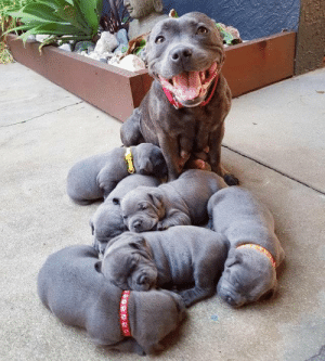 Proudest mom (via): Proudest mom (via)